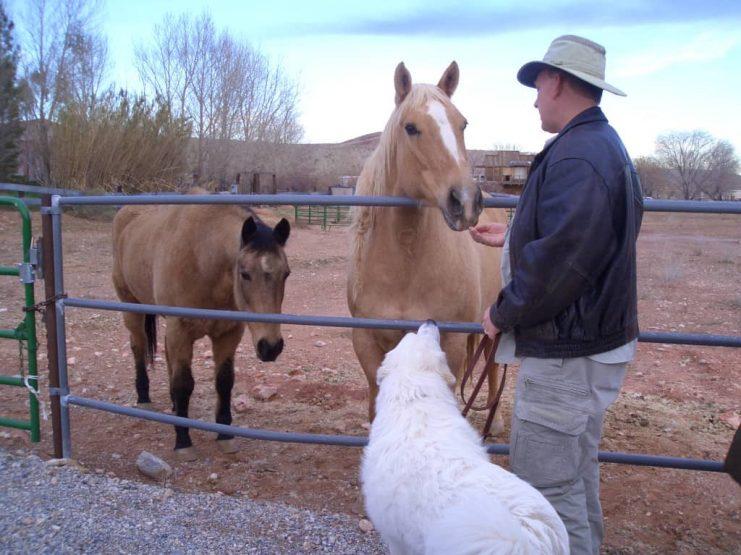 will_freedom__horses_2